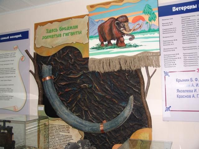 Бивень мамонта в музее БПК